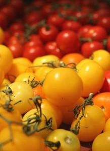 Le lycopène antioxydant puissant dans la tomate bio